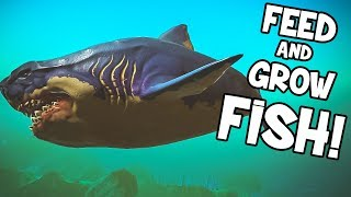 JE CHEAT DANS FEED AND GROW FISH!