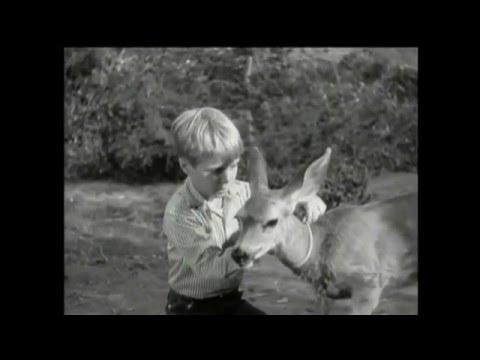 "Lassie - Episode #226 - ""'The Renegade"" - Season 7, Ep 7 - 10/23/1960"