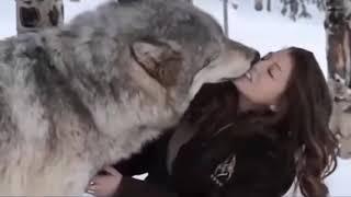 Những tình bạn khó tin giữa con người và động vật hoang dã