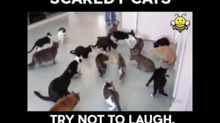 Как кошка играется и пугается