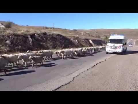 Бараны Армении