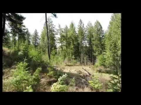 21 Acres Chattaroy Washington - Jim Hill Movie/Picture Tour