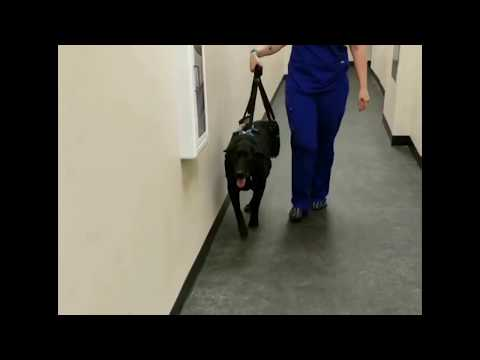 Recommended by Veterinarians | Used at Veterinary Hospitals