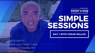 Learn The Importance Of Agreement & The Dog Walk With Cesar Millan