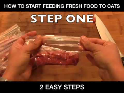 How To Feed Your Cat Fresh/Raw Food: Beginners Guide