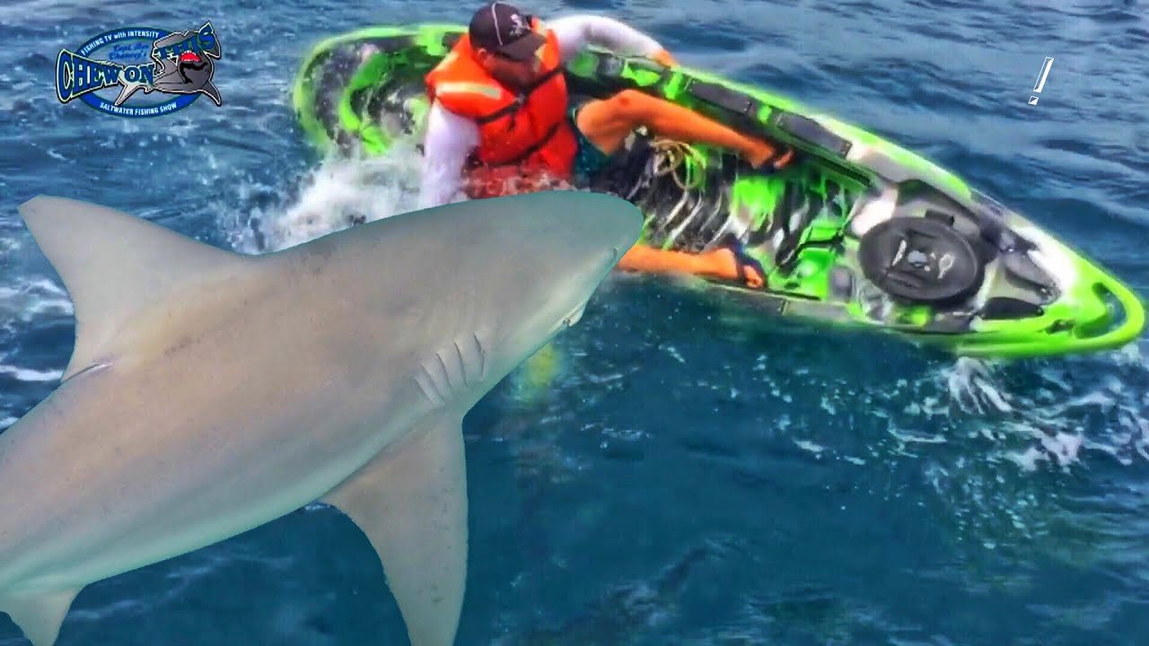 Scary shark fishing accident amazing fish sharks flip for 95 9 the fish