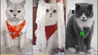Tiktok Funny Animal / Douyin Cute And Funny Pets Compilation 2020 #03