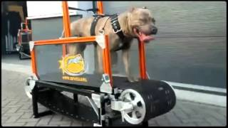 hf mills extreme dog gear
