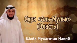 Сура «Аль-Мульк» (Власть). Слушайте каждую ночь I Шейх Мухаммад Накиб