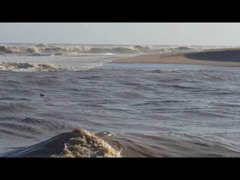 Shark in Tugela River mouth 1
