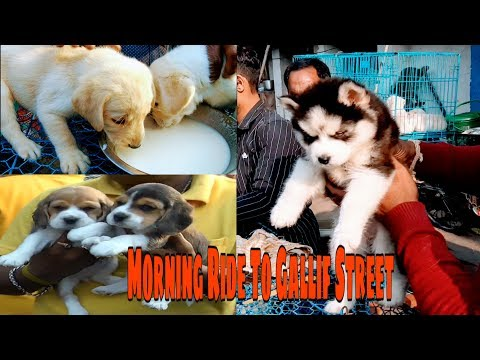Galiff Street Pet Market Price | Best Place To Buy Puppy | Wholesale Price Puppy