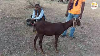 Goat Diarrhoea treatment