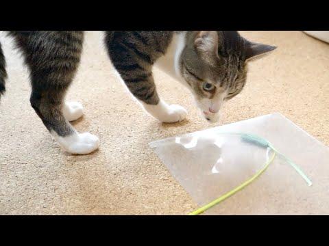 コツを掴んだ猫