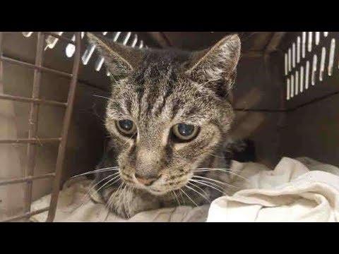 19 летний кот обнимал лапами хозяина, которого не видел 7 лет, а мужчина не мог сдержать слезы