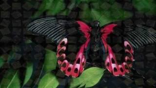 Anne Murray - Sentimental Favorite YouTube Videos