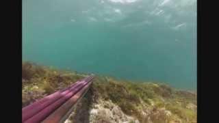 pesca sub necton 95