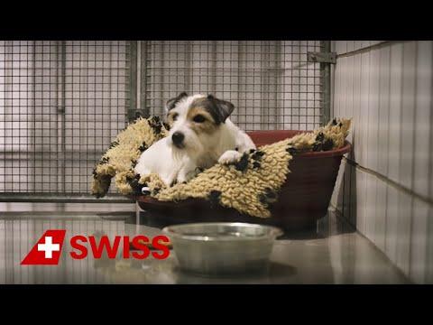 Swiss WorldCargo - Bon voyage for animals