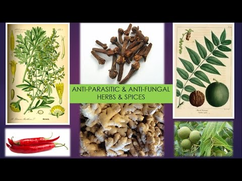 Anti-Parasitic - Anti-Fungal Herbs & Spices