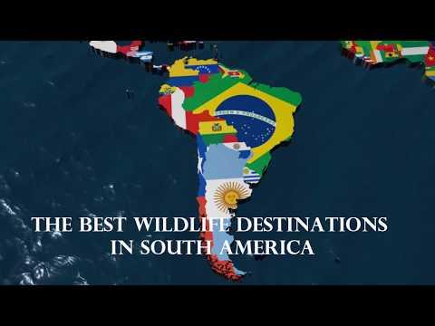Best wildlife destinations in South America