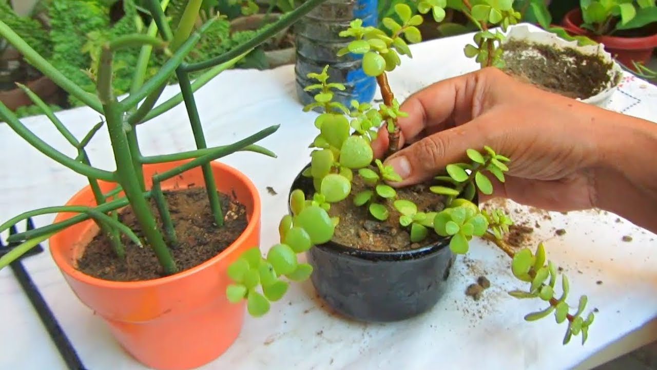 best plants for small pots