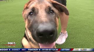 Georgia breeder trains dogs for vets in honor of teen's suicide