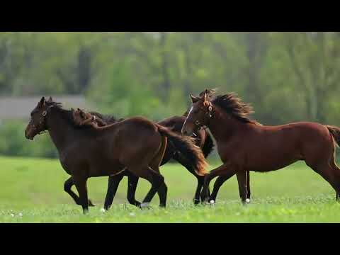 How do horses earn a spot in the Kentucky Derby?
