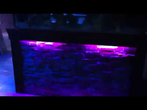 300 Gallon Tank @ Maritime Reef
