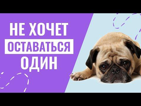 Вопрос: Как приучить собаку оставаться надолго одной?