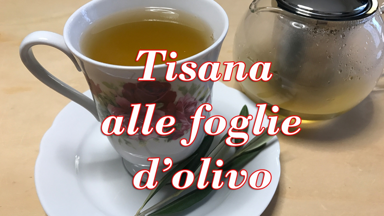 TISANA ALLE FOGLIE D'OLIVO OTTIMO RIMEDIO NATURALE - YouTube