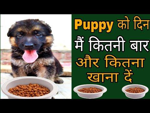एक दिन में छोटे Puppy को कितनी बार और कितना खाना देना चाहिए // Cheapest Dog Market /dog price list