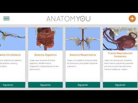 Anatomyou VR | Anatomía Humana - Apps en Google Play