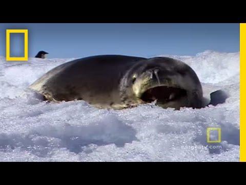 Antarctica | Exploring Oceans