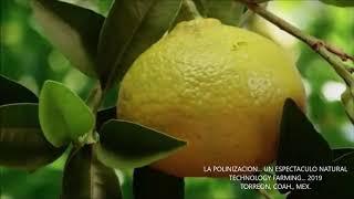 LA POLINIZACION... UN ESPECTACULO NATURAL... TECHNOLOGY FARMING 2019