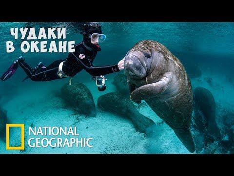 Самые странные животные в океане | (National Geographic)