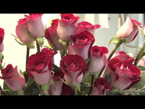 College Park Florist Prepares for Valentine's Day