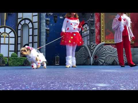 Mañana de Carnaval Canino
