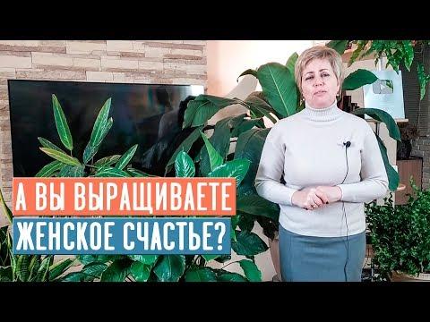 СПАТИФИЛЛУМ ЖЕНСКОЕ СЧАСТЬЕ �� Особенности выращивания / Садовый гид