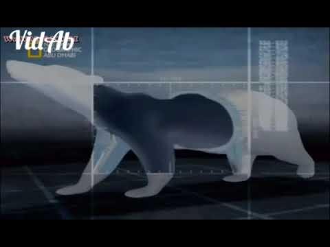 وثائقي الحياة البرية:أساطير عالم الجليد