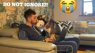 Jealous Husky Puppy Refuses To Let Dad Work!! [FUNNIEST REACTION!!]