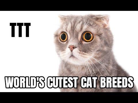The Top Ten Cutest Cat Breeds   2019