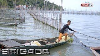 Brigada: Pagbaklas ng mga fish cage sa Laguna de Bay, ikinababahala ng ilang mangingisda