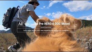 GoProHERO6を犬の背中に付けて川に遊びに行った! GoProHERO6 DogMount