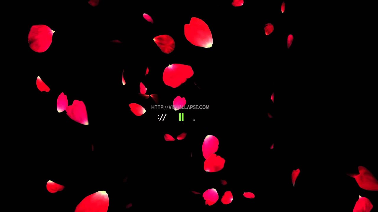 Falling Leaves Hd Live Wallpaper Rose Petals Fly Down Youtube