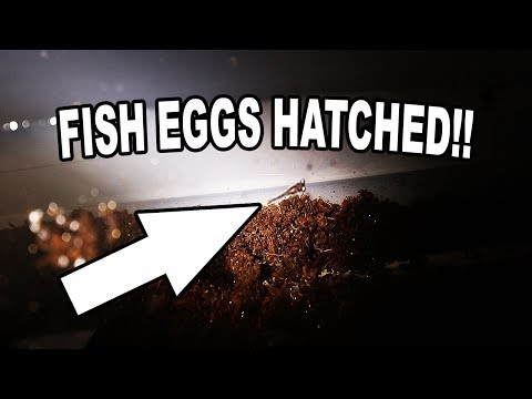 400 AQUARIUM FISH EGGS THAT CAME IN THE MAIL!!