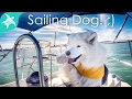 Doggie sailing school - Arya drives the boat! ;)
