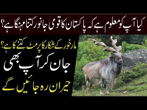 Do Know The Price Of Markhor ?