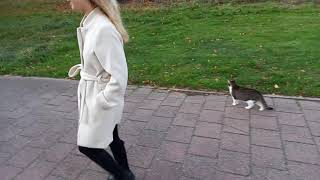 Cat Following Us