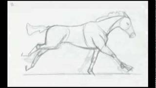 Galloping Horse Animation Progress