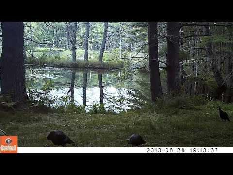 New Hampshire woods via wildlife camera