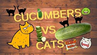 FUNNY CAT VIDEOS | Cat Fails | CATS Vs CUCUMBERS | Funny Cats | Cats and Cucumbers | Scared Cat